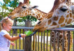 Family Fun - Lion Safari & Aquapark
